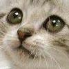 avatar_11814.jpg